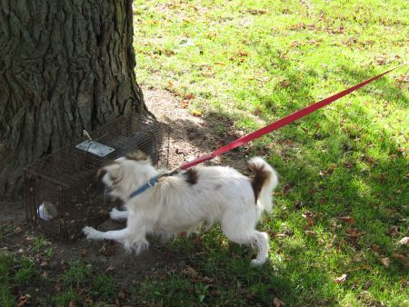 Starting a Squirrel Dog - Dogs and Dog Training - Pigeon Watch Forums