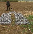PigeonPlucker