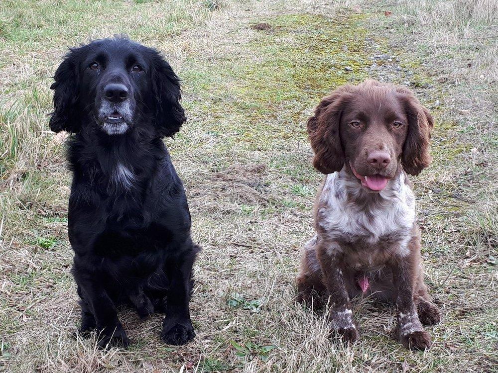 Barney and Jasper.jpg