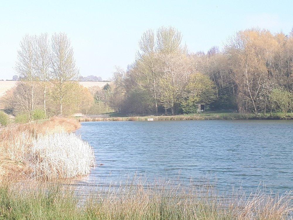 Pond April 19.jpg