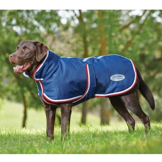 dog coat.jpg