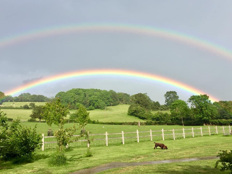 rainbow charlie.jpg