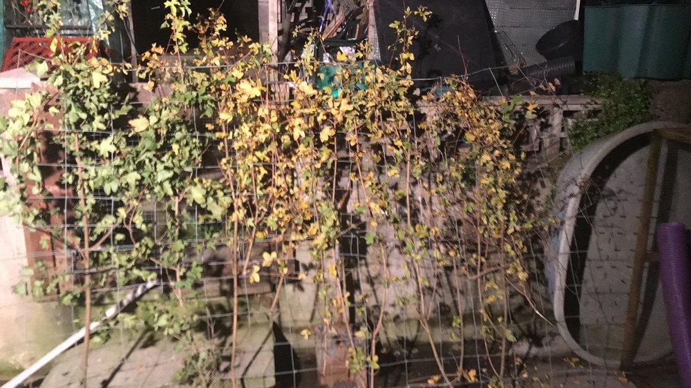 hedge.jpg.8d905274fcf044b459c0a7b18580c4ac.jpg