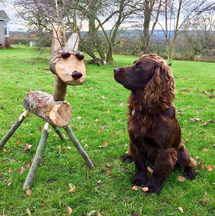 reindeer charlie.jpg