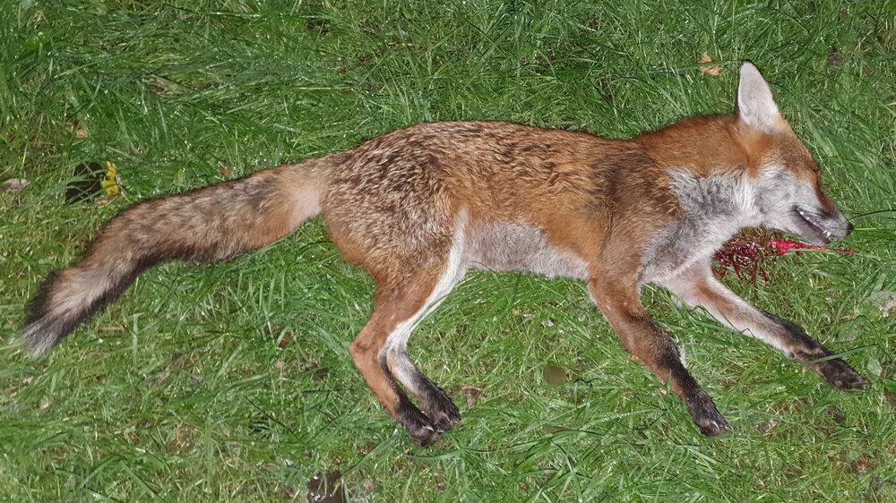 fox video.jpg