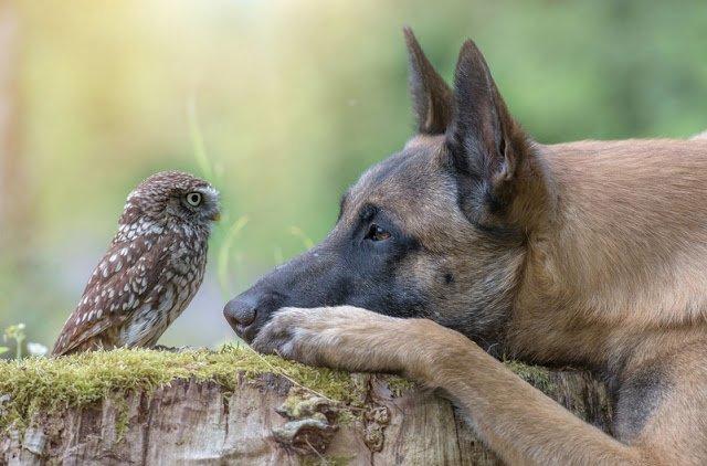 Owl14.jpg