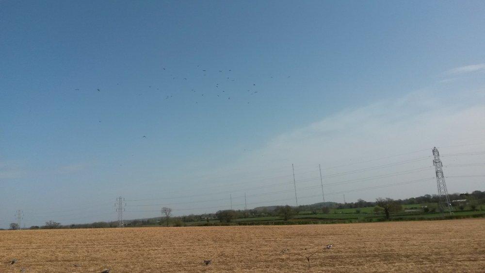 large flocks 1.jpg