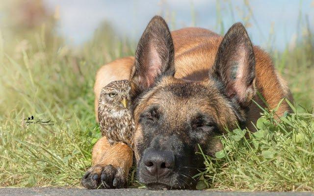 Owl17.jpg