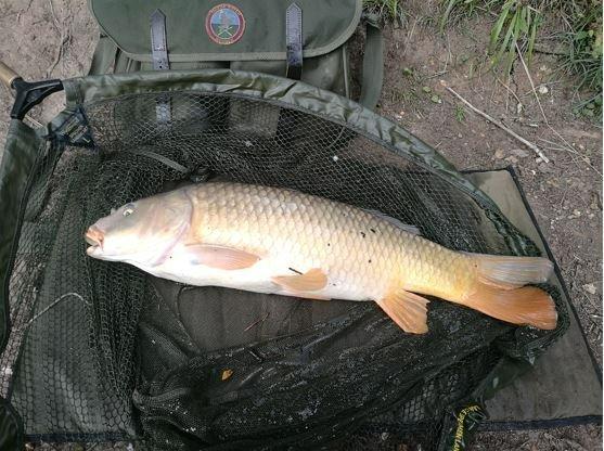 Fish2.JPG.1bad5cdedff982c4e233ac963caf280d.JPG