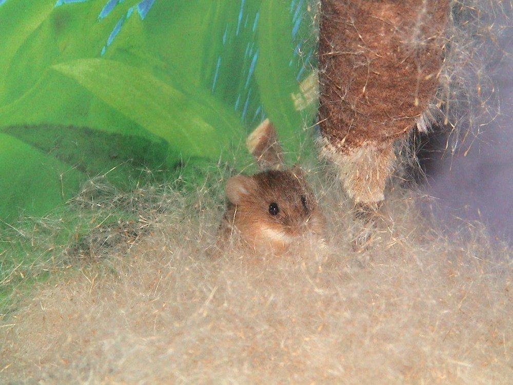mice7 001.jpg