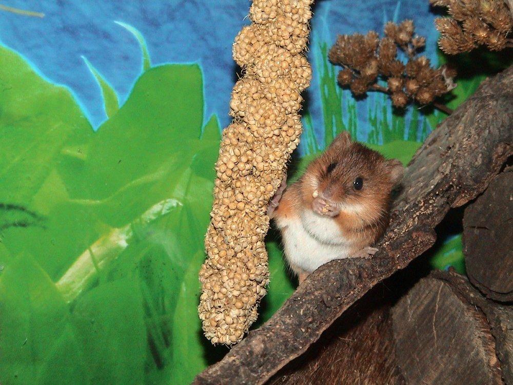 mice 1 011.jpg