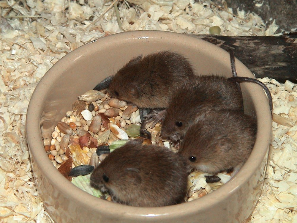 mice9 002.jpg