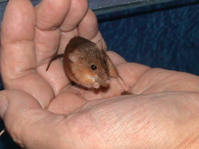 mice mice11 010.jpg