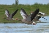 Fowling rules and regs - last post by greylag