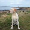 Anglesey Wildfowling Club - last post by hedd-wyn