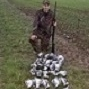 Woodpigeon Syndicate East Lincolnshire - last post by tomo-uk