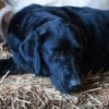 Puppy vaccination - last post by silver pigeon69