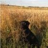 Norfolk wildfowlers - last post by Norfolk Rogue1