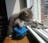 Sniper-Blend